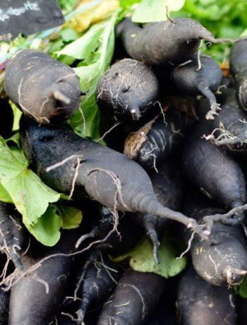 svartrot skorsonerrot i bunke rotgrønnsaker utendørs